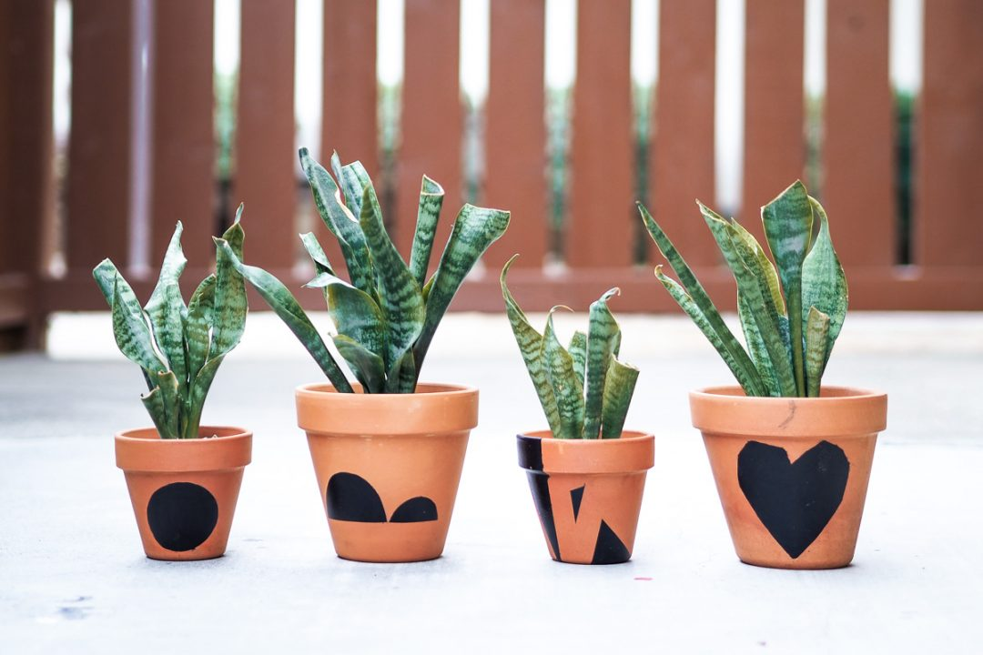 DIY customized terracotta pots