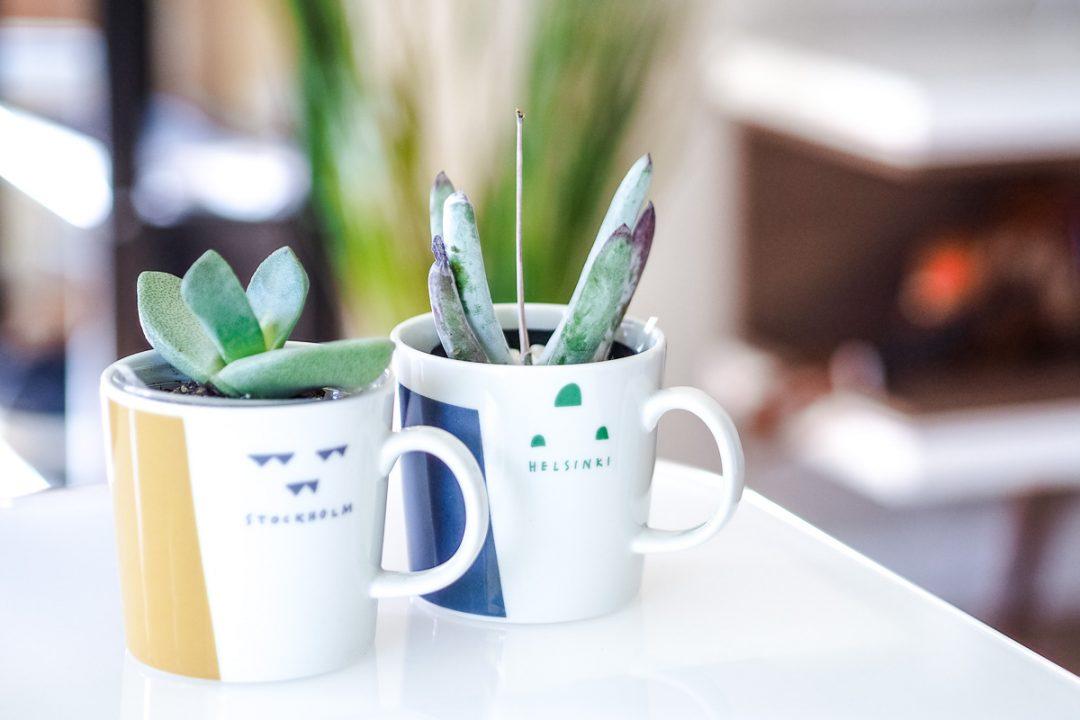 Lithops, Living stones, Iittala city mug series