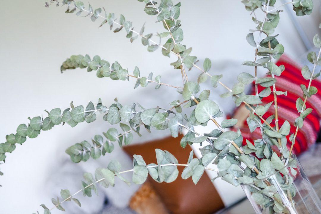 dried eucalyptus home decor