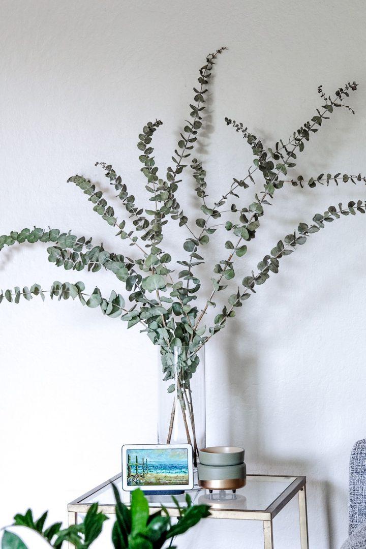 eucalyptus as home decor