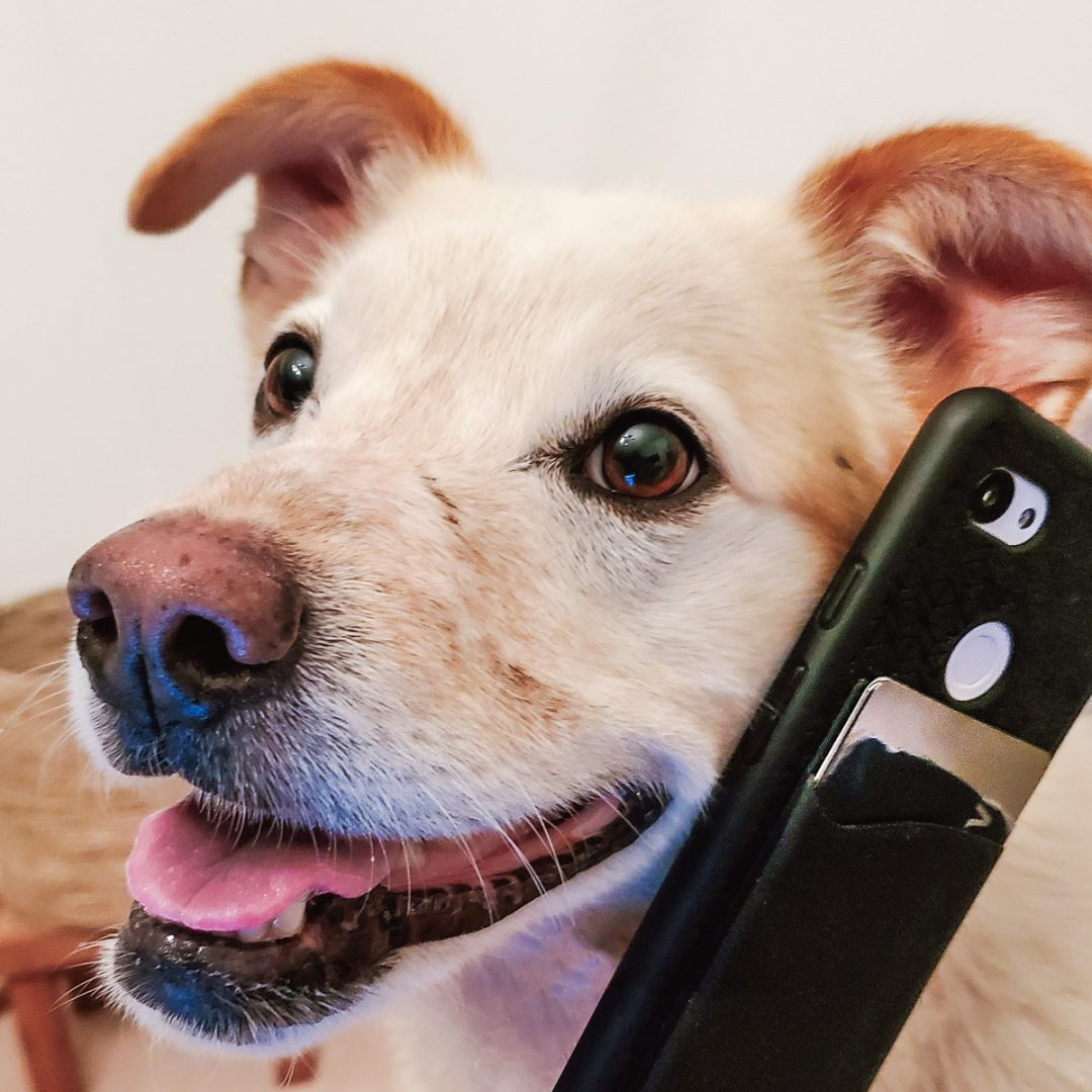 dog holding phone and wallet